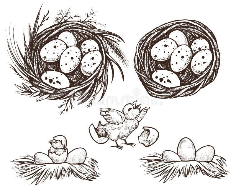 Sistema de la jerarquía y pollo de la trama Gráfico del vector stock de ilustración