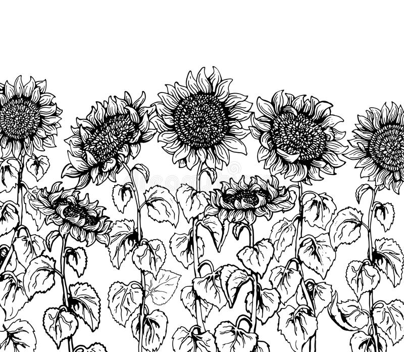 Sistema de la línea gráfica dibujada mano del bosquejo del vintage del girasol libre illustration