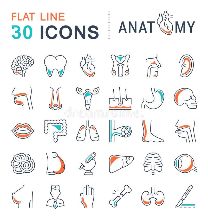 Sistema de la línea iconos de anatomía y de fisiología libre illustration