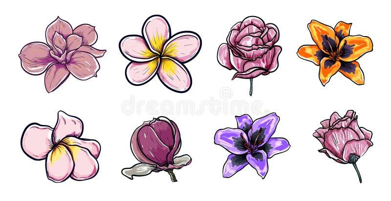Sistema de la magnolia hermosa de las flores, plumeria, rosas, flores de dibujo asiáticas del ejemplo del vector de la primavera libre illustration