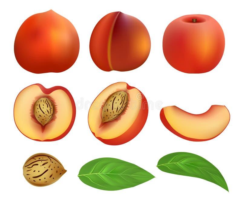 Sistema de la maqueta de la hoja de la fruta de las rebanadas del melocotón, estilo realista libre illustration