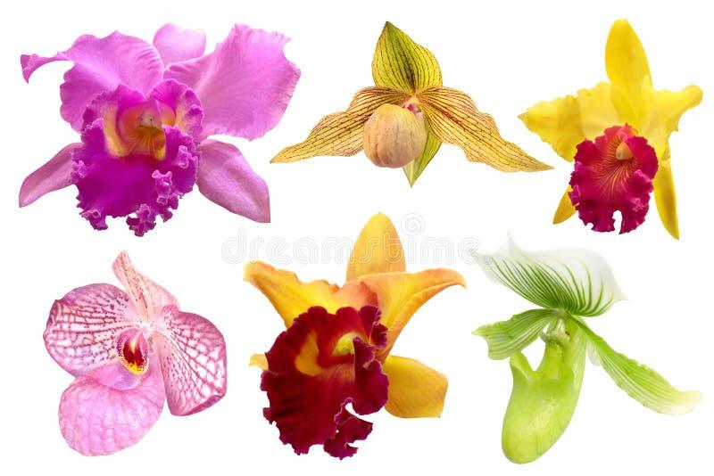 Sistema de la orquídea colorida aislado en el fondo blanco foto de archivo libre de regalías