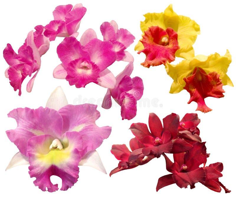 Sistema de la orquídea colorida aislado en el fondo blanco imagenes de archivo