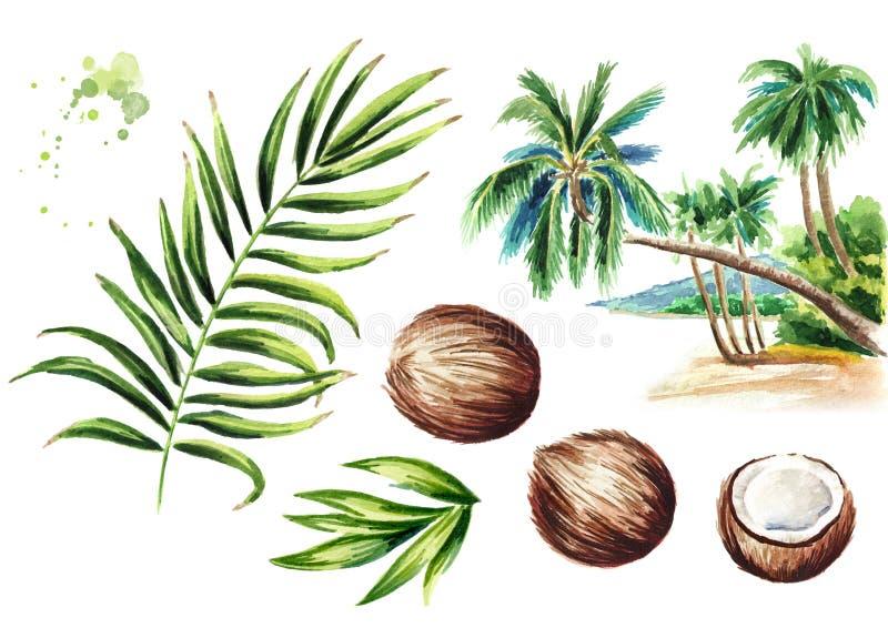 Sistema de la palma de coco Ejemplo dibujado mano de la acuarela, aislado en el fondo blanco ilustración del vector