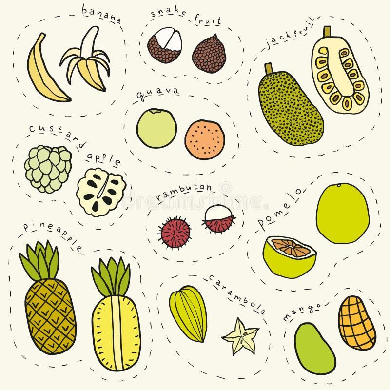 Sistema de la parte dibujada mano 1 de frutas tropicales ilustración del vector