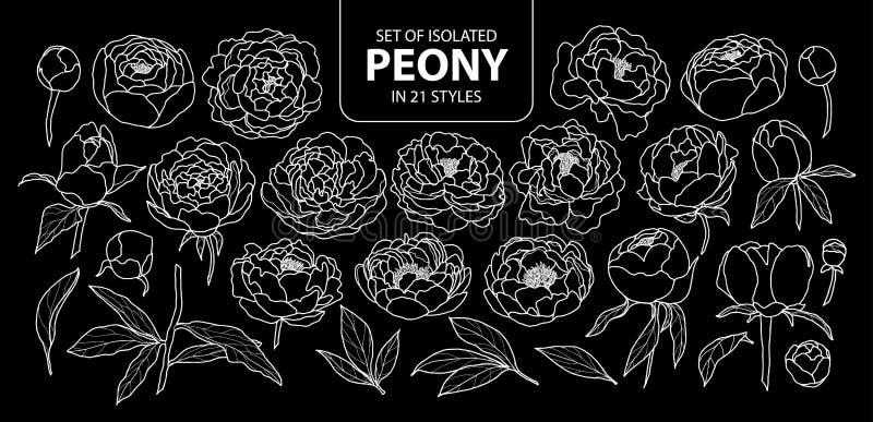 Sistema de la peonía aislada en 21 estilos Esquema blanco dibujado mano linda del ejemplo del vector de la flor solamente stock de ilustración