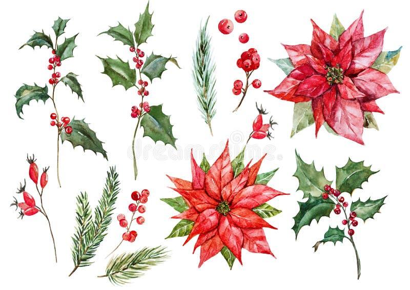 Sistema de la poinsetia de la Navidad de la acuarela ilustración del vector