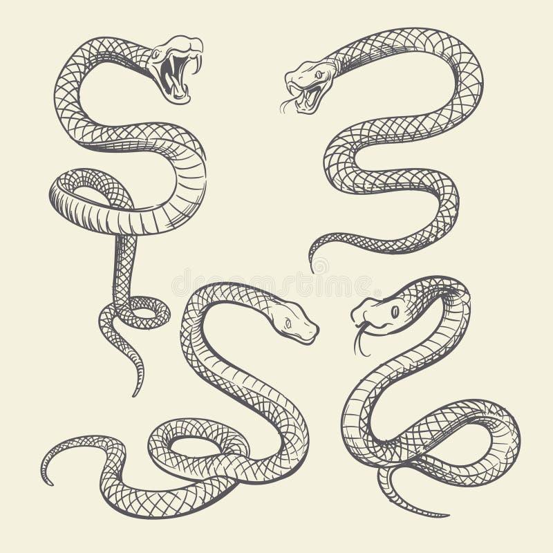 Sistema de la serpiente del dibujo de la mano Diseño del vector del tatuaje de las serpientes de la fauna aislado libre illustration