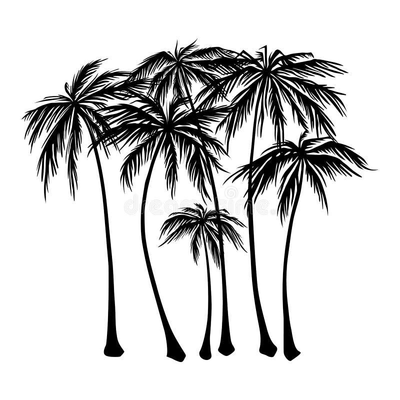 Sistema de la silueta negra de las palmeras en un fondo blanco Vector el ejemplo, elemento del diseño para las tarjetas de la enh libre illustration