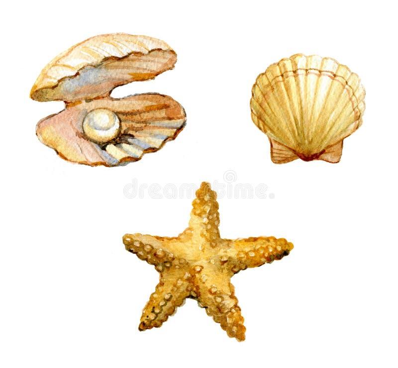 Sistema de las cáscaras del mar, estrellas de mar, cáscara con una perla aislada en el fondo blanco, acuarela ilustración del vector