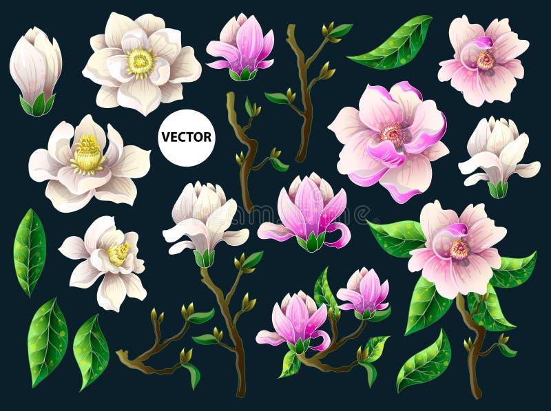 Sistema de las flores blancas y rosadas de la magnolia Ilustración del vector stock de ilustración