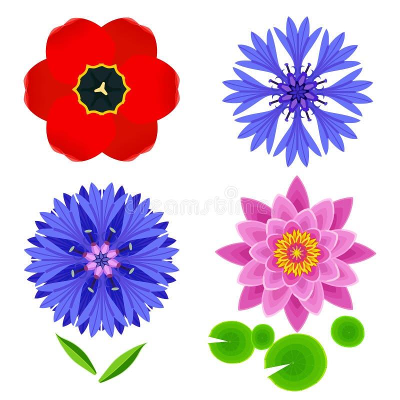 Sistema de las flores tulipán, loto, aciano aislado sobre blanco ilustración del vector