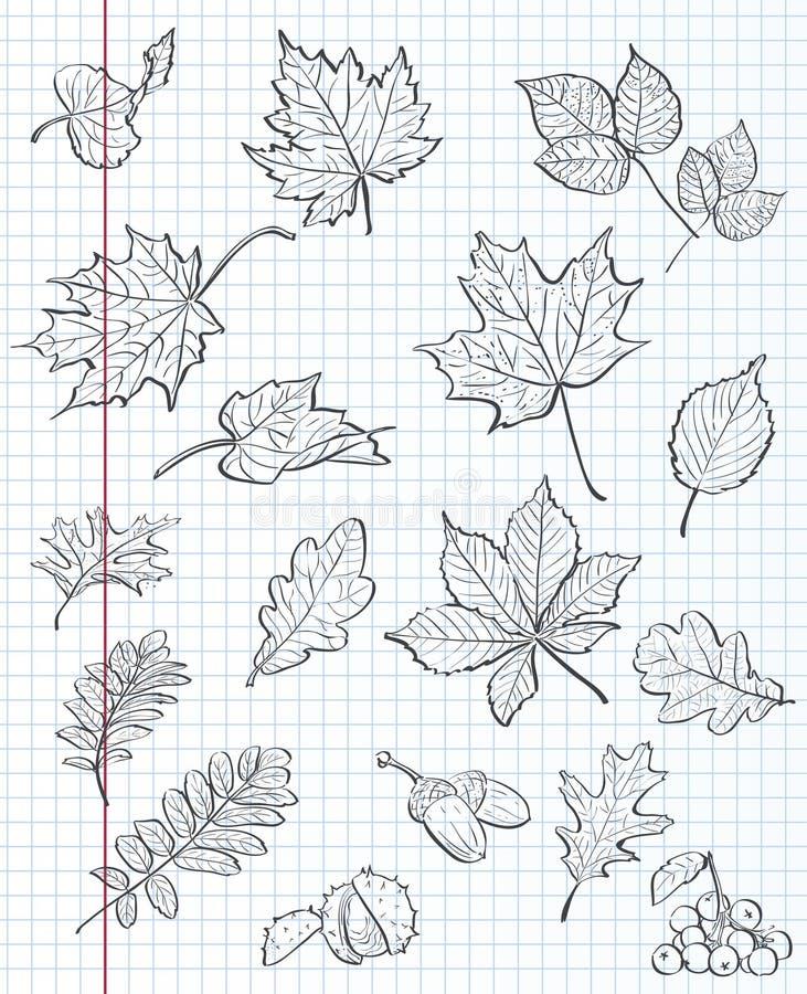 Sistema de las hojas de otoño, de las castañas, de las bellotas y del viburnum en un fondo del libro de ejercicio en una jaula Co libre illustration