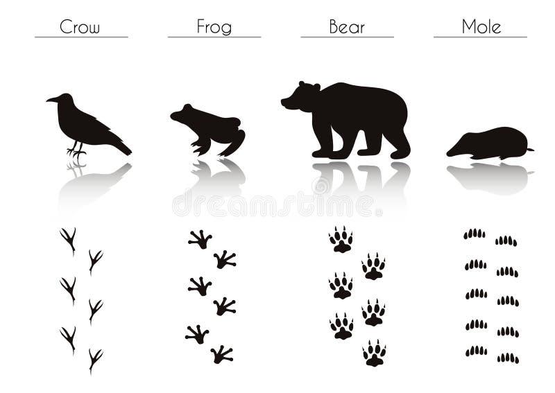 Sistema de las siluetas negras de Forest Animals y de los pájaros: Cuervo, rana, B libre illustration