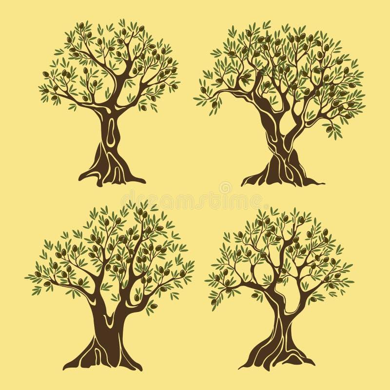 Sistema de los árboles griegos del aceite de oliva en estilo del vintage ilustración del vector