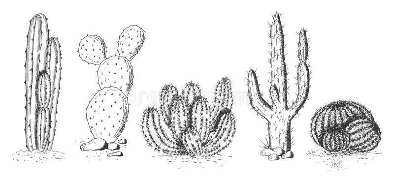 Sistema de los cactus y de los succulents del desierto ilustración del vector