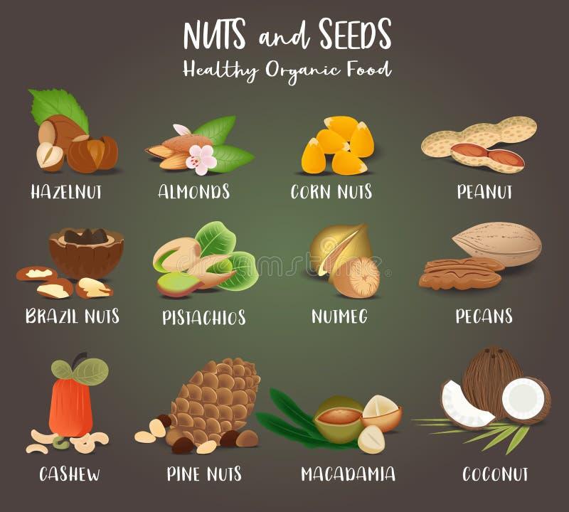 Sistema de los granos alimenticios y de las semillas de la nuez stock de ilustración