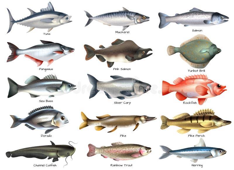 Sistema de los iconos de los pescados ilustración del vector