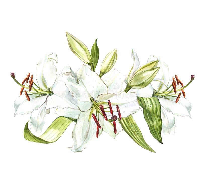 Sistema de los lirios blancos, de la acuarela ejemplo botánico dibujado mano de las flores aisladas en un fondo blanco stock de ilustración