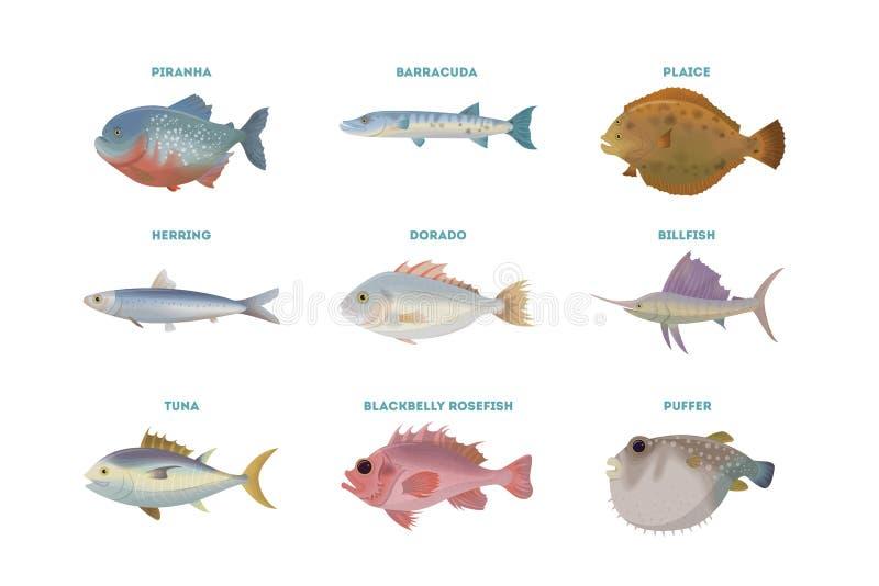 Sistema de los pescados de mar stock de ilustración