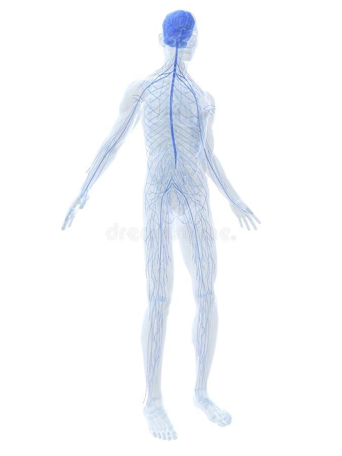 Sistema de Nervouse ilustração stock