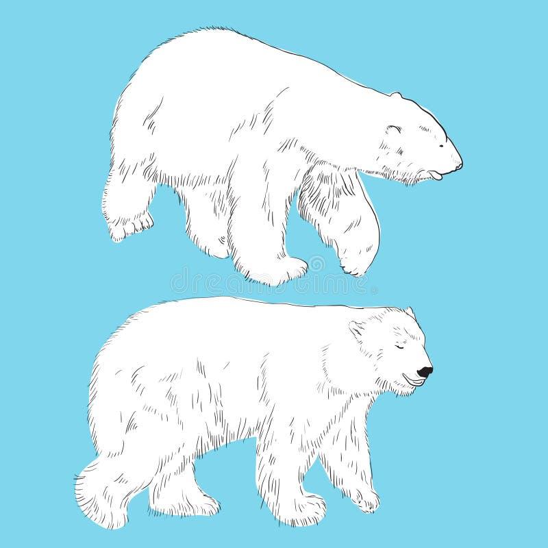 Sistema De Osos Polares Del Dibujo Linear Fotografía de archivo