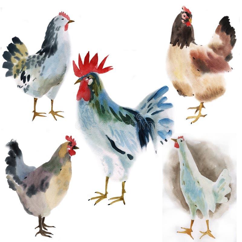 Sistema de pájaros de la granja Ejemplo de la acuarela en el fondo blanco ilustración del vector