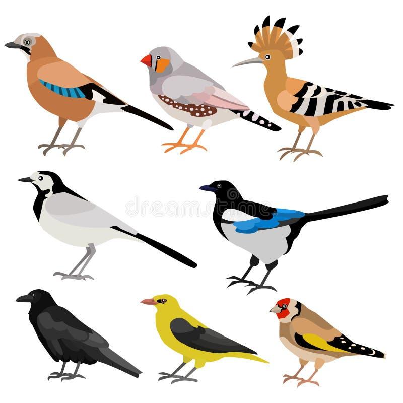 Sistema de pájaros divertidos divertidos lindos libre illustration