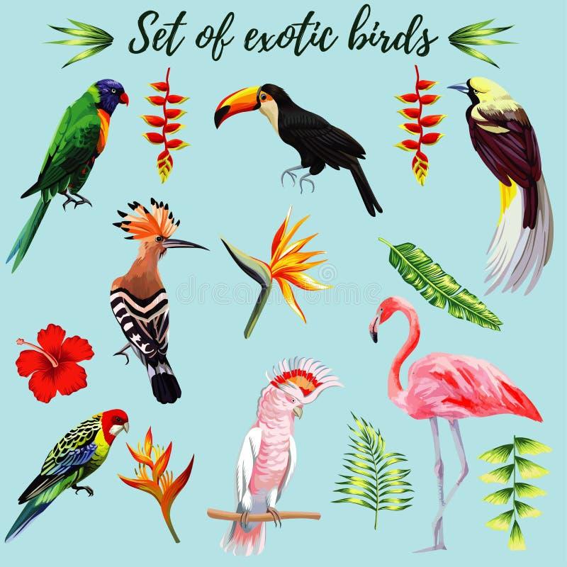 Sistema de pájaros exóticos ilustración del vector