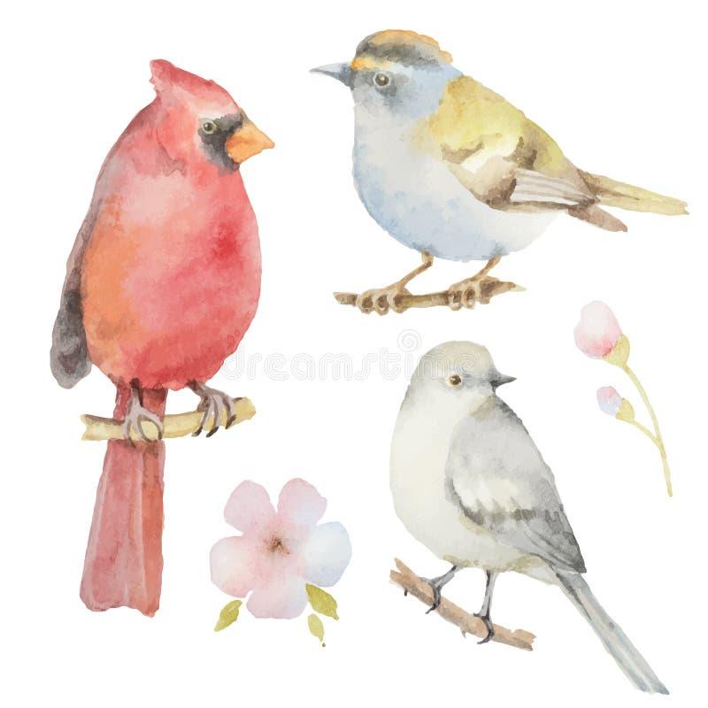 Sistema de pájaros y de flores de la acuarela stock de ilustración