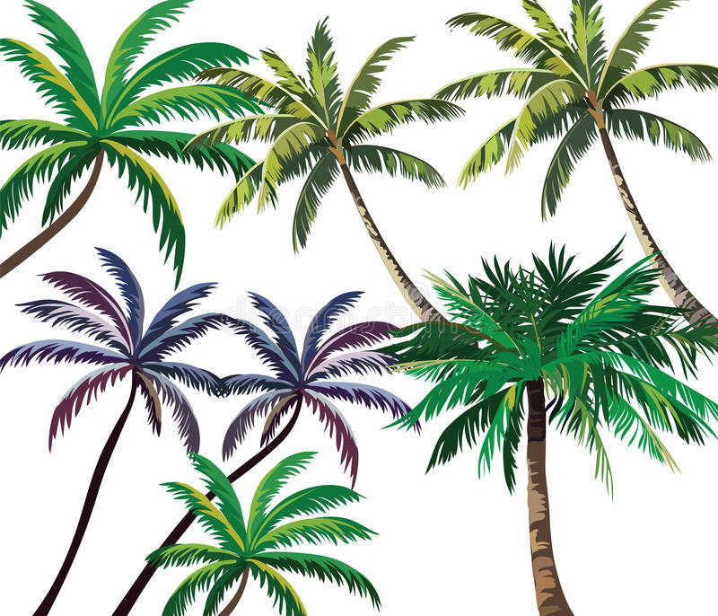 Sistema de palmeras tropicales ilustración del vector