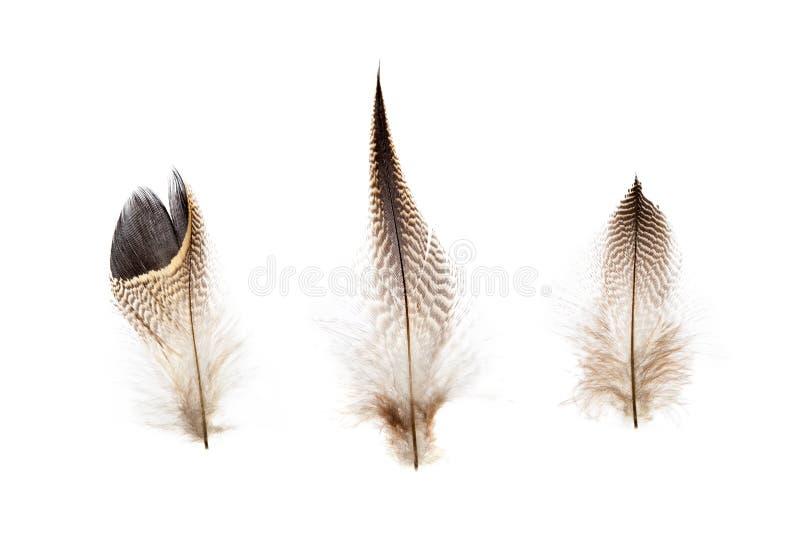 Sistema de pequeñas plumas de pájaro frágiles hermosas aisladas fotografía de archivo libre de regalías