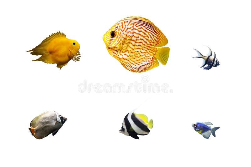 Sistema de pescados tropicales aislados en blanco imagen de archivo