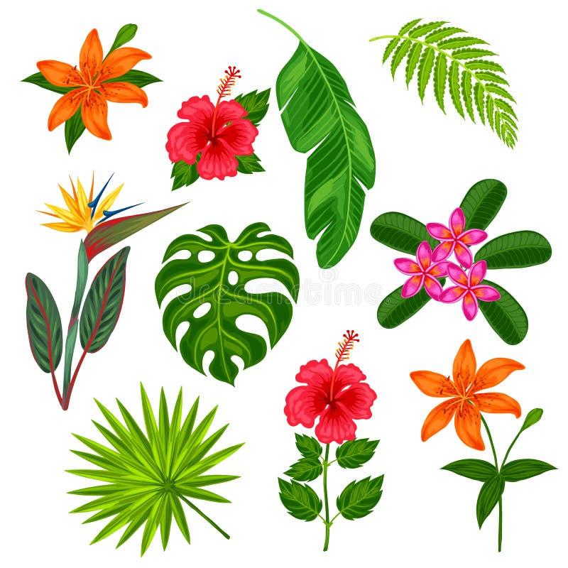 Sistema De Plantas Tropicales, De Hojas Y De Flores Estilizadas ...