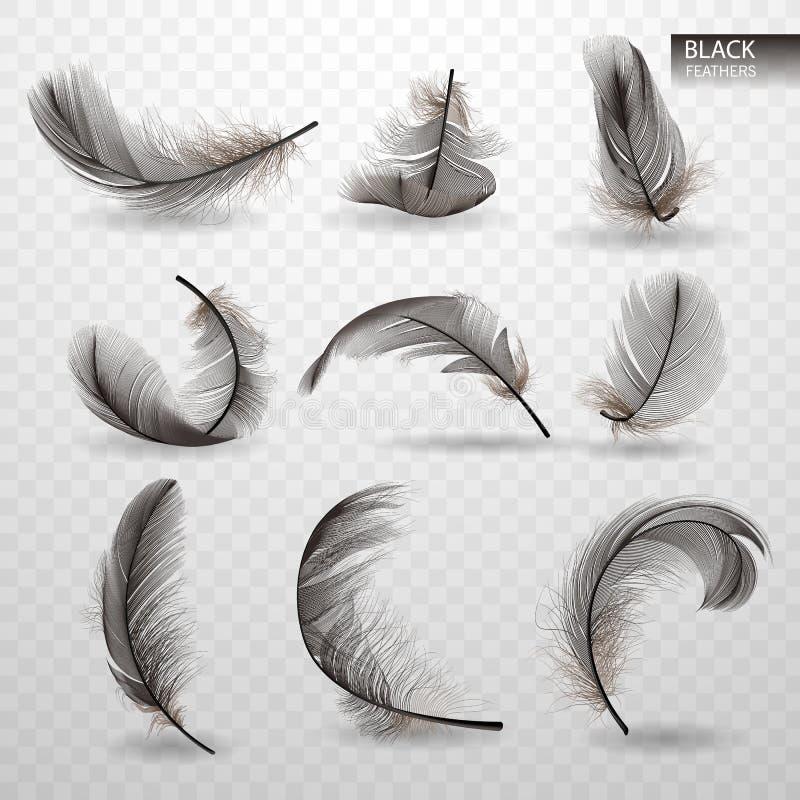 Sistema de plumas giradas mullidas negras que caen aisladas en fondo transparente en estilo realista Ilustración del vector ilustración del vector
