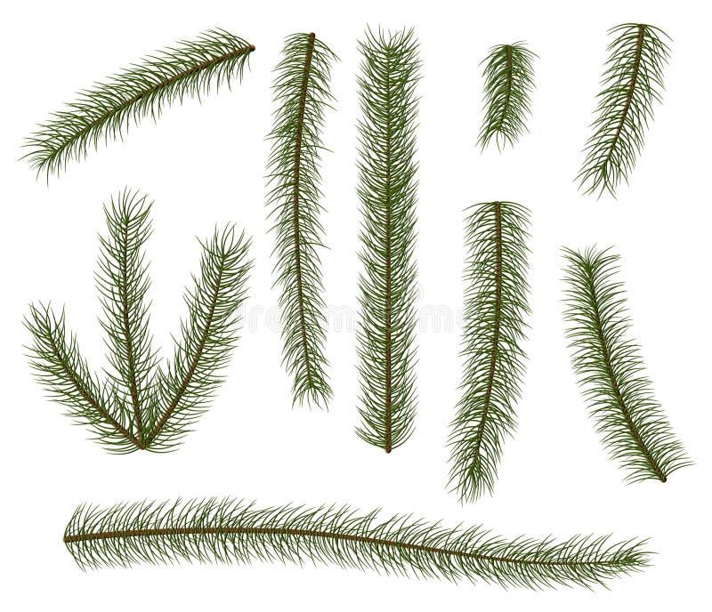 Sistema de ramas de árbol de abeto libre illustration