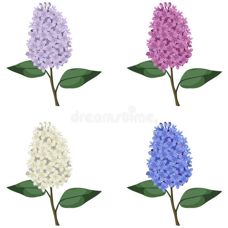 Sistema de ramas multicoloras de la lila ilustración del vector