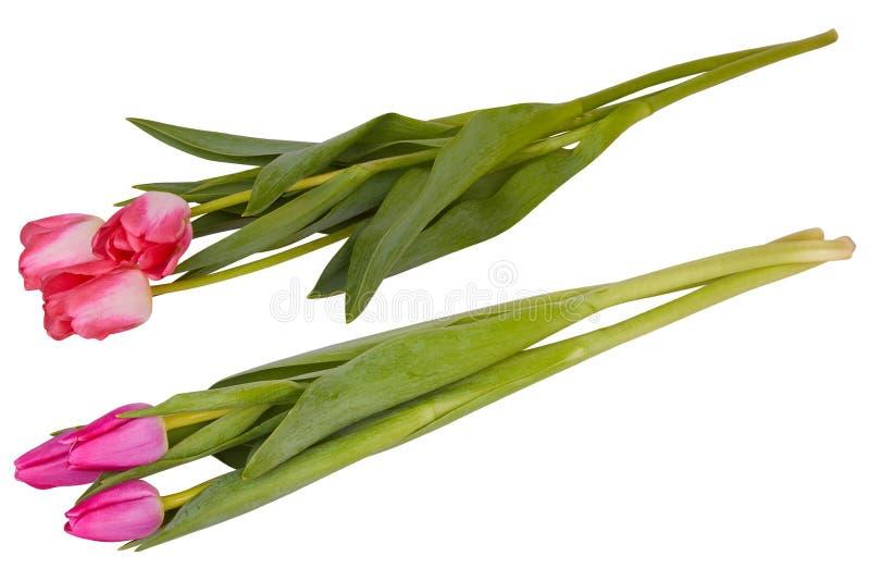 Sistema de ramos rojos y rosados de las flores del tulipán aislados en blanco imagen de archivo