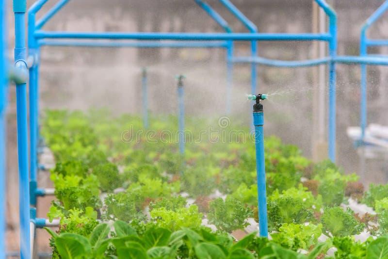 Sistema de rociadores del agua que trabaja en granja de la verdura del hidrocultivo fotos de archivo libres de regalías