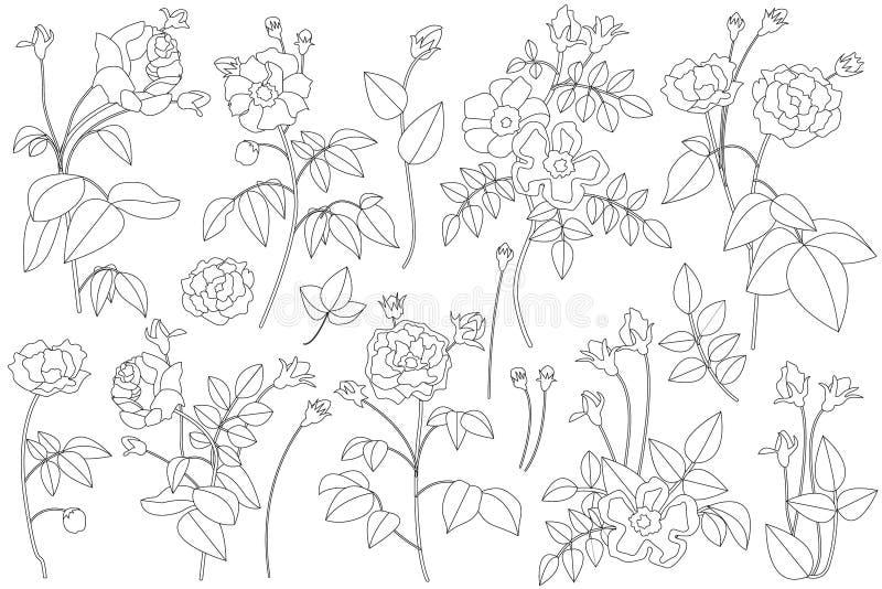 Sistema de rosas lineares blancos y negros ilustración del vector