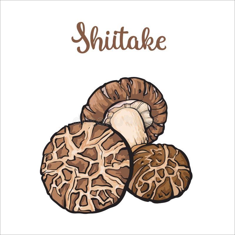 Sistema de setas comestibles del shiitake stock de ilustración