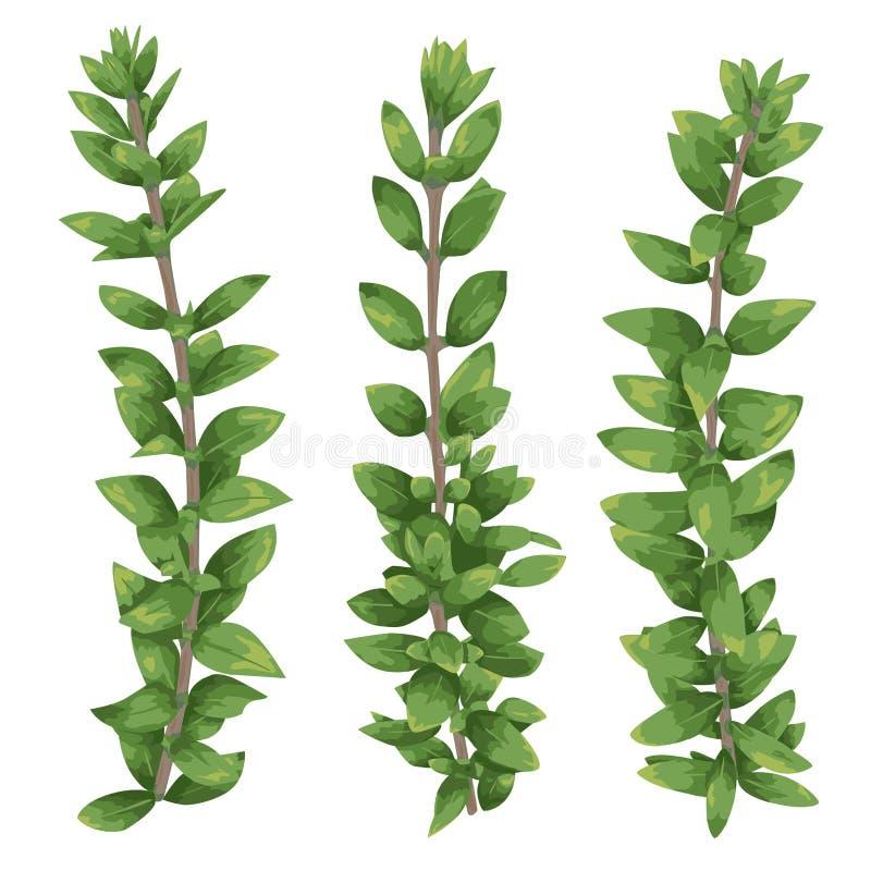 Sistema de siluetas de un buxus del boj de las ramas aislado en whi stock de ilustración