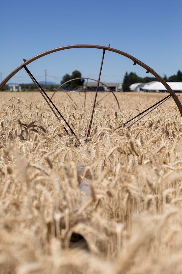 Sistema de sistema de extinção de incêndios dourado do campo de trigo com rodas imagens de stock royalty free