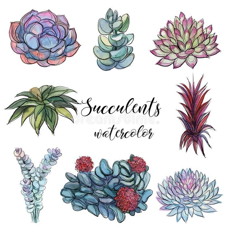 Sistema de succulents watercolor gráficos Ejemplo aislado del vector de los objetos libre illustration
