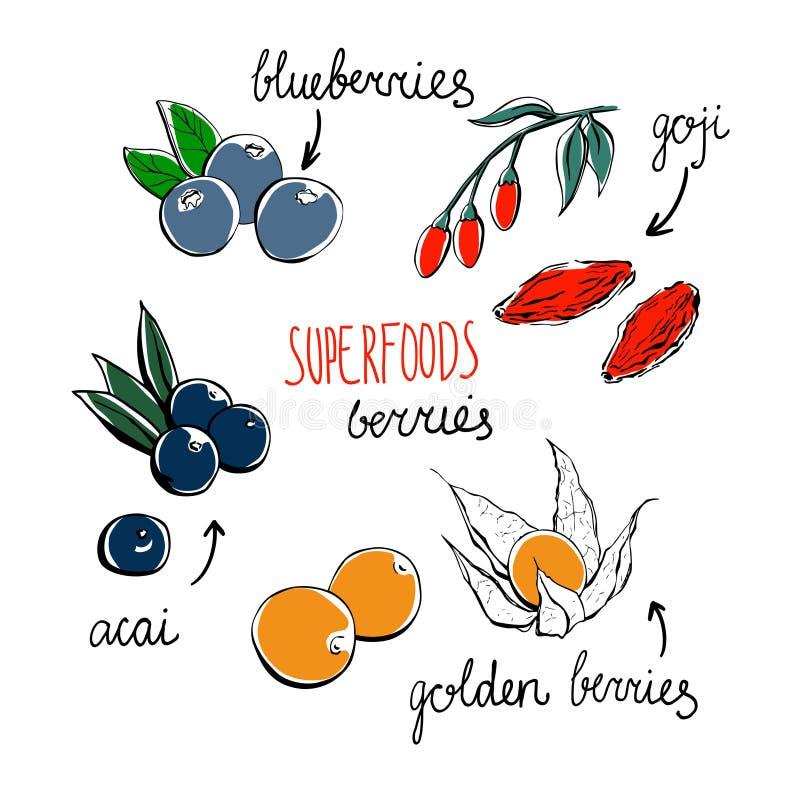 Sistema de superfoods dibujados mano del garabato libre illustration