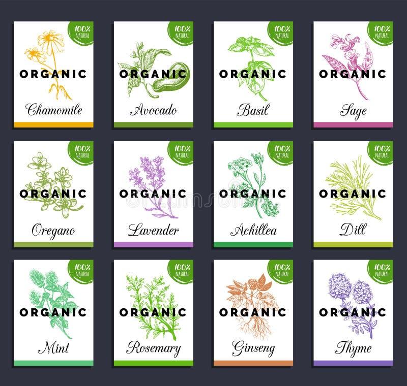 Sistema de tarjetas de las hierbas y de las especias Medicinal dibujada mano, cosmético planta la colección Grabado de etiquetas  libre illustration