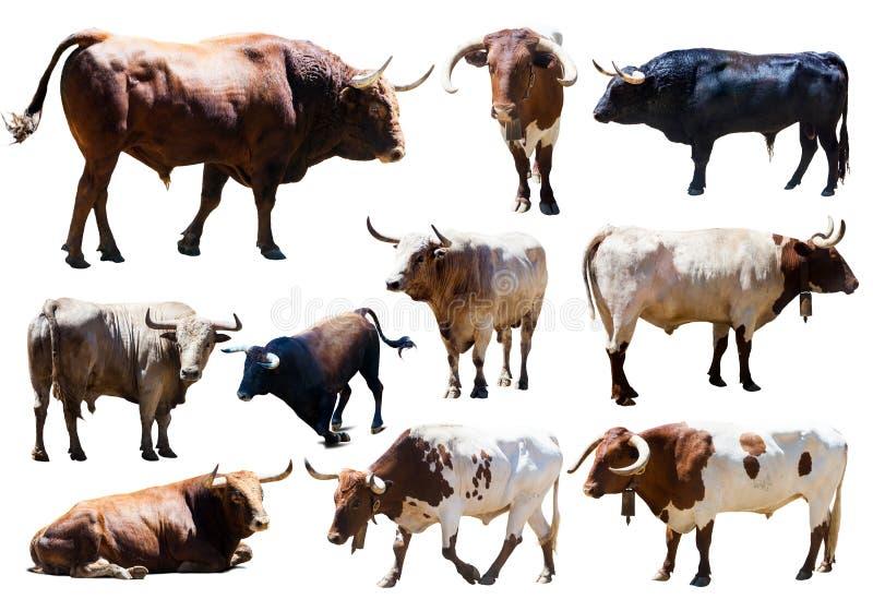 Sistema de toros. Aislado sobre blanco foto de archivo