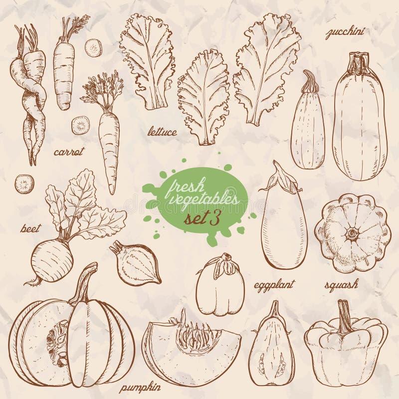 Sistema de verduras aisladas en un estilo del bosquejo Zanahorias, lechuga, calabacín, berenjena, calabaza, remolachas, calabaza stock de ilustración