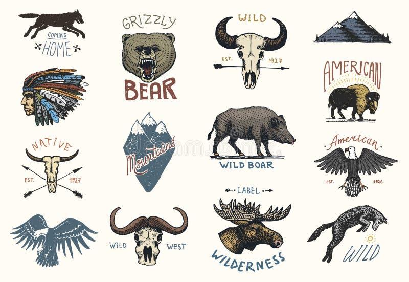Sistema de vintage grabado, mano dibujada, vieja, etiquetas o insignias para acampar stock de ilustración