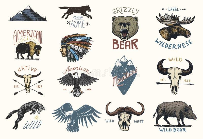 Sistema de vintage grabado, mano dibujada, vieja, etiquetas o insignias para acampar, el caminar, cazando con el verraco, el oso  stock de ilustración